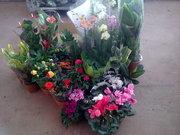 Цветы мелким оптом