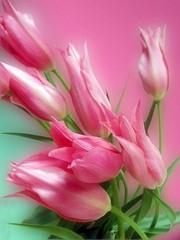 тюльпаны на 8 марта 2012 года оптом и в розницу