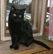 Симпатичный черный котенок